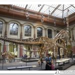 museo historia natural berlin
