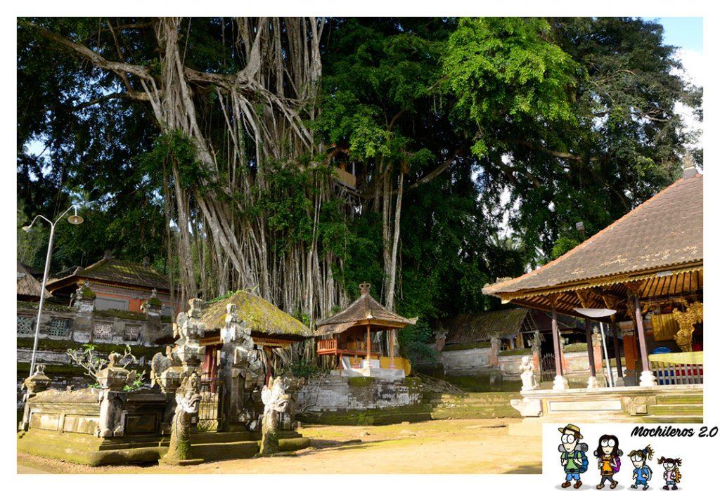 bali banyan tree