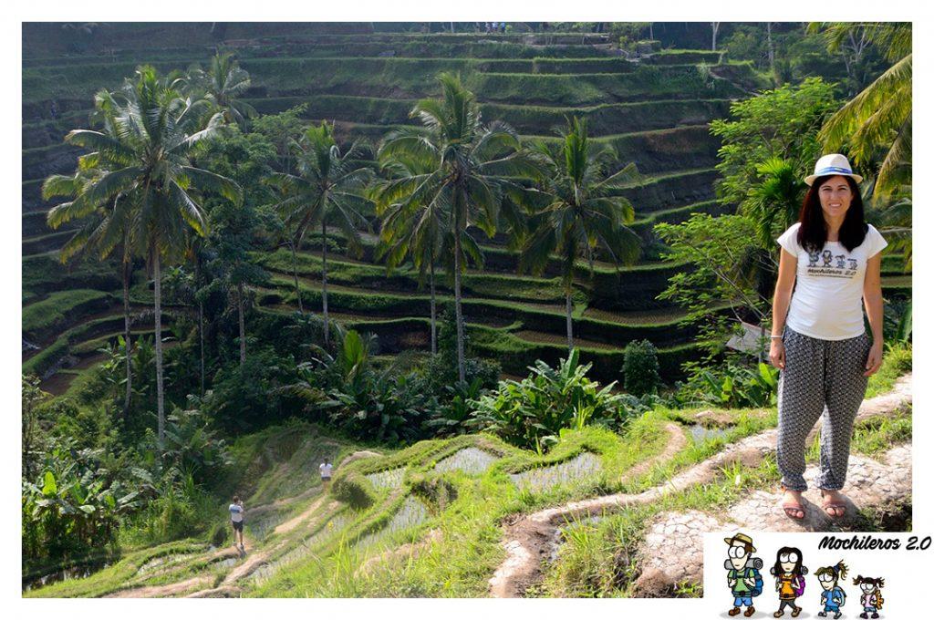 bali visita arrozales