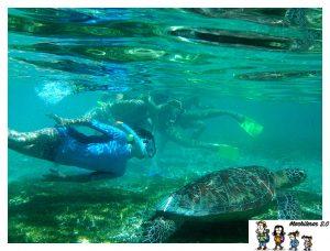 buceando con tortugas