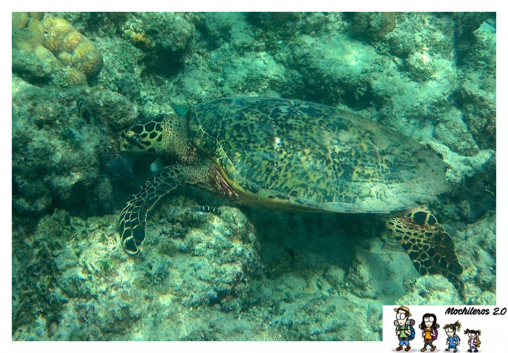tortugas en gili