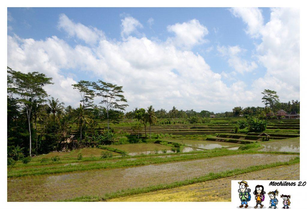 ubud arrozales