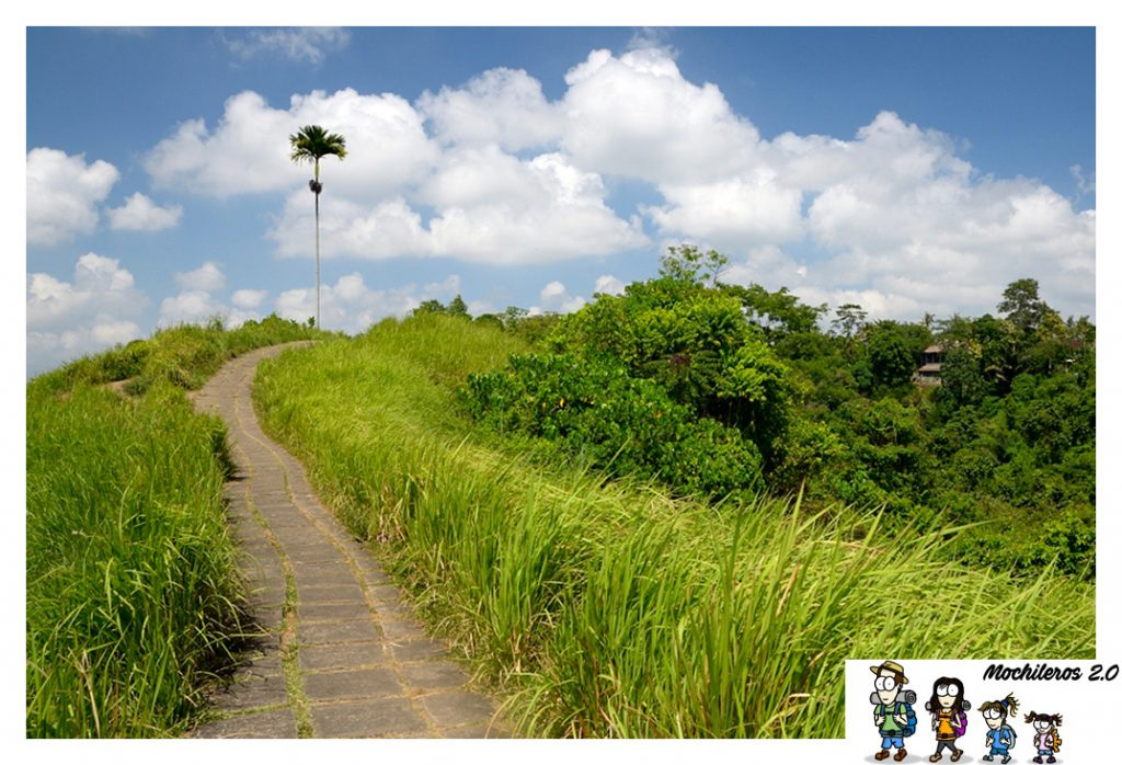 ubud campuhan ridge walk