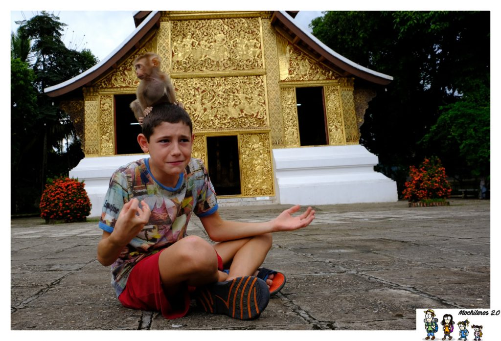 wat xieng thong monkey