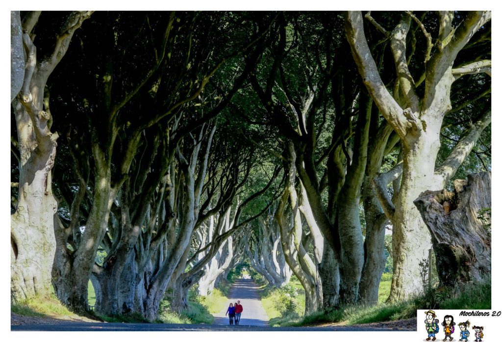dark hedges game thrones