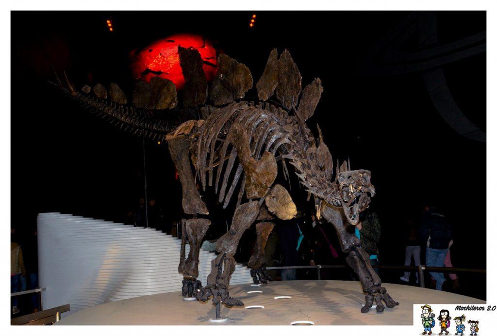 dinosaurio museo historia natural