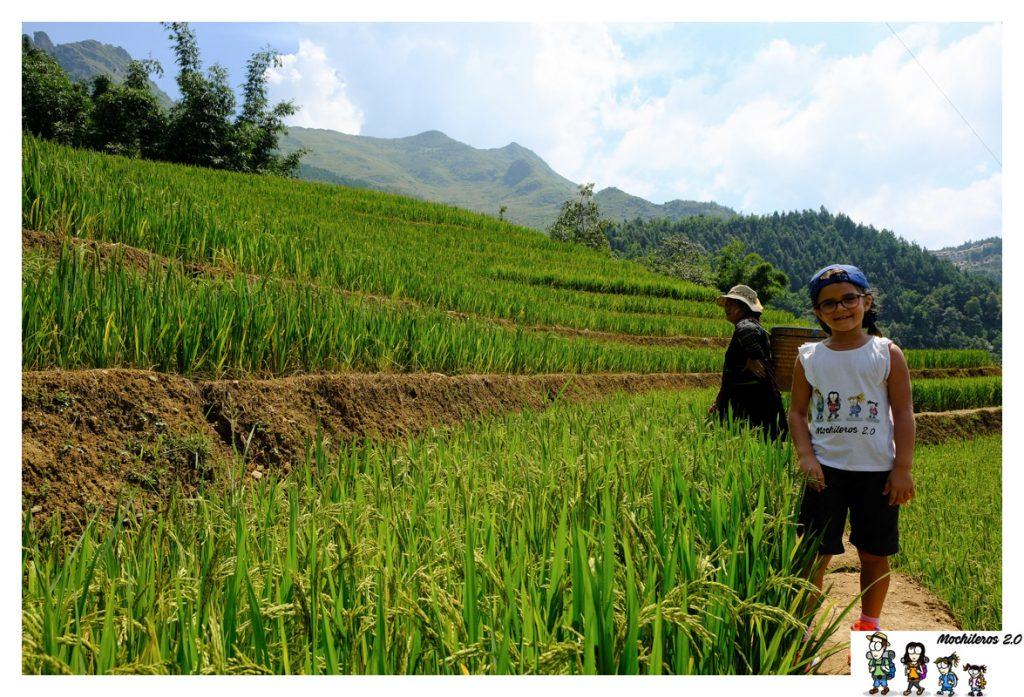 sapa ruta arrozales