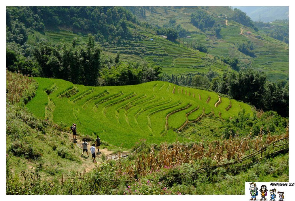 sapa senderismo arrozales