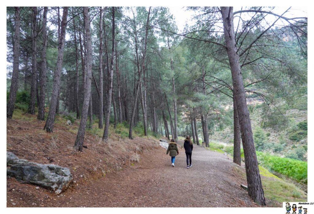 Tramo de pinos del sendero